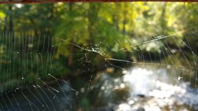 Spider Web and River Bokehs Stock Photography