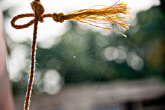 Spider Web and Rope Royalty Free Stock Images