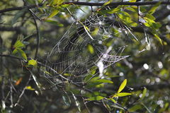 Spider Web. Santa Maria Ponta Grossa Paraná Brazil stock photos