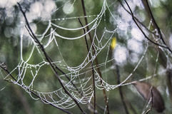 Spider web saturated in dew Stock Photos