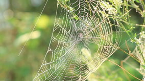 Spider web shaking on the Wind  stock video