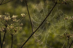 Spider web shaking on wind Royalty Free Stock Photos