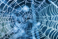 Spider web with shiny blue drops Stock Photo