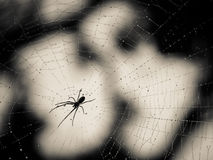Spider and Web Silhouette. Silhouette of a spider on a dew covered web against blurred tree and sky background Royalty Free Stock Photography