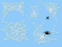 Spider web silhouette arachnid fear graphic flat scary animal design nature insect danger horror halloween vector icon. Stock Images
