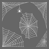 Spider web silhouette arachnid fear graphic flat scary animal design nature insect danger horror vector icon. Stock Image