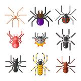 Spider web silhouette arachnid fear graphic flat scary animal design  Stock Photo