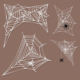 Spider web silhouette arachnid fear graphic flat scary animal design nature insect danger horror halloween vector icon. Stock Image