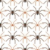 Spider web silhouette arachnid fear seamless pattern  Stock Images