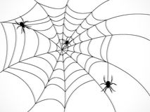 Spider web Royalty Free Stock Images