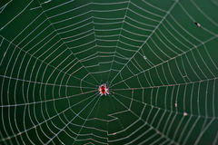 Spider in a web. Small spider in center of its web Royalty Free Stock Photos
