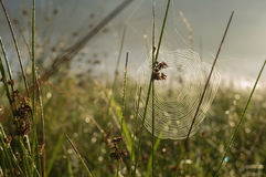 A spider web with some dew early in the morning with the sun rays Royalty Free Stock Photos