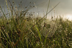 A spider web with some dew early in the morning with the sun rays Stock Images