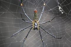 Spider web. Spdier web insect closeup Stock Photo