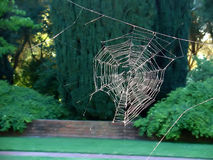 Spider web without the spider. A spider web catches the sunlight royalty free stock photos