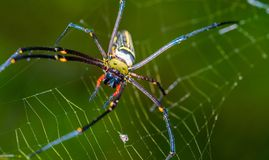 Spider And Web Spider Fiber Cobweb royalty free stock photo