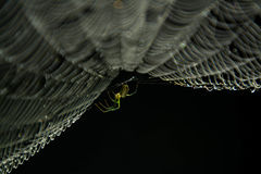 Spider web and spider. Royalty Free Stock Photos