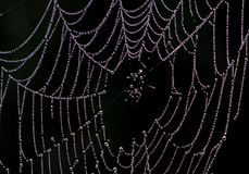 A spider web stock image