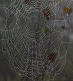 A spider web stock photos