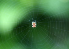 Spider and web. A spider standing in the middle of the spider web Stock Images