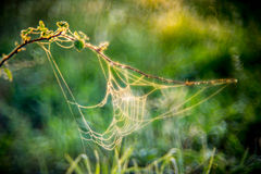 Spider web. Summer meadow background with spider webs in morning light stock image