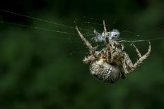 Spider on the web in summer stock photo