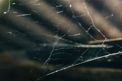 Spider web in sun rays Royalty Free Stock Images