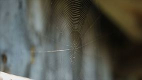 Spider web on a sunny day