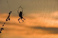 Spider and web at sunrise. A spider in silhouette suspended by its web as the sun rises in the background Stock Image