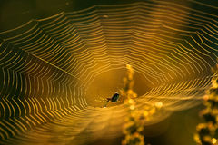 A spider in a web Stock Image