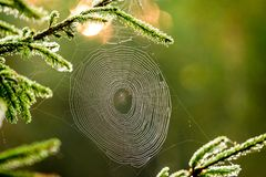 cobweb in forest, macro Royalty Free Stock Images