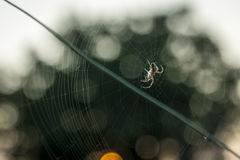 The Spider & The Web. At Sunset I Spot this little spider that was still on work stock photography