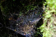 Spider web on tree branch stock images
