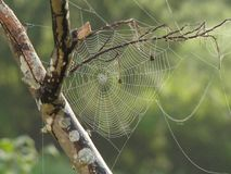 Spider Web, Tree, Branches, Pattern Royalty Free Stock Photos