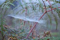Spider web. Royalty Free Stock Photography
