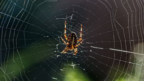 Spider web, under the backlighting, macro Stock Photos