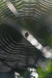 Spider web, under the backlighting Royalty Free Stock Photos
