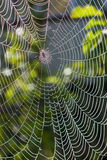 Spider web under sunlight Royalty Free Stock Photo