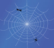 Spider web vector Royalty Free Stock Photos