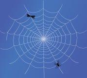 Spider web vector Royalty Free Stock Photos