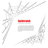Spider web vector illustration on white background Stock Photos