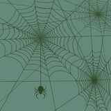 Spider web vector Royalty Free Stock Photography