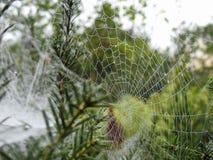 Spider Web, Vegetation, Flora, Leaf Stock Photography