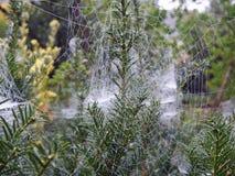 Spider Web, Vegetation, Flora, Plant Royalty Free Stock Photo