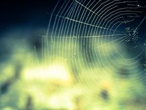 Spider Web, Water, Atmosphere, Sky Stock Photos