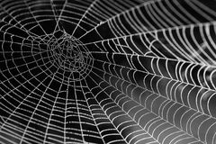 Spider Web With Water Beads Royalty Free Stock Photos