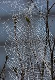 Spider Web, Water, Branch, Tree Royalty Free Stock Image