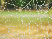 Spider web. Water droplets on a spider web Browser arranged in a row as a line of natural gemstones Stock Images