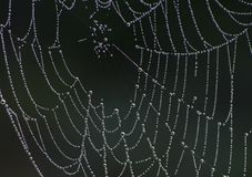 A spider web stock photography