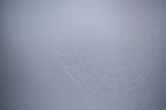 Spider web with water droplets Stock Photos